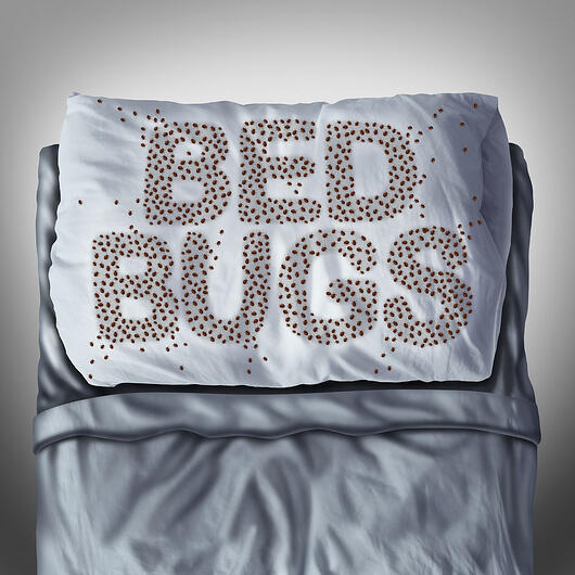 Bed bugs-web